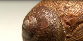 Охлюви Gastropoda Предотвратете инфестация от