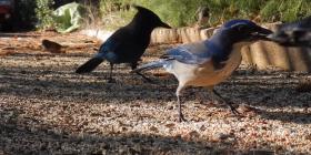 Птици Aves Предотвратете инфестация от