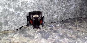 Щурци Gryllidae Предотвратете инфестация от